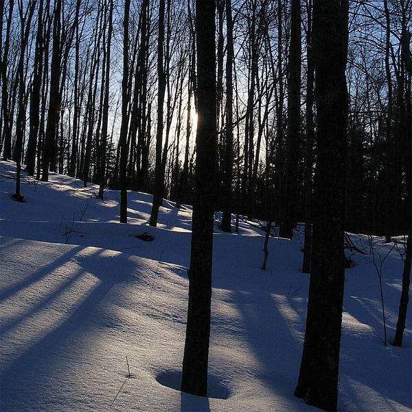 Photo of trees and snow backlit by the sun.