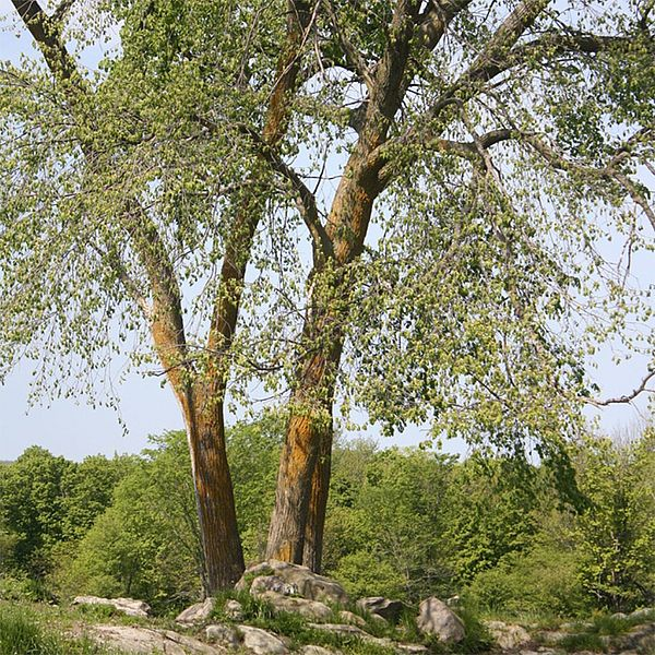 Photo of a tree.