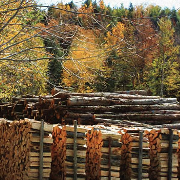 Photo of stacked firewood and logs with fall foliage in the background.